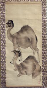 Image of Camels