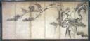 Image of Hawks in Pine Tree Screen