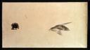 Image of Swallow on Paper, reverse side